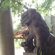 雉子神社の狛犬様