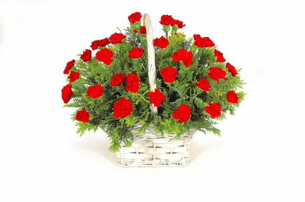 flowers-2253641_640