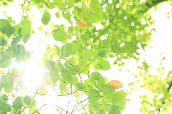 輝く緑葉の画像
