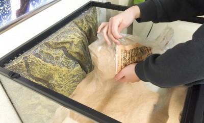 ケージ全体に床材を敷き詰める