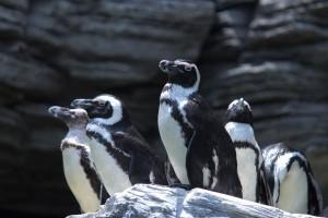 ペンギンもドキドキ。