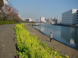 花海道菜の花