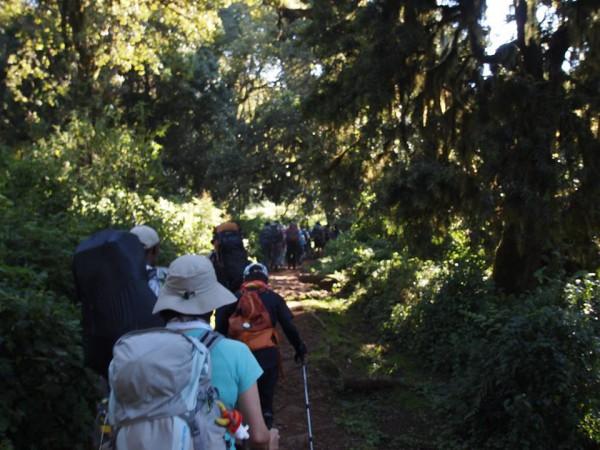 最初はジャングルの中を歩きます。